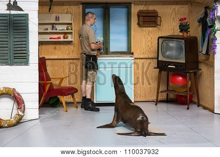 Sea Lions Show In The Zoo Of Antwerp, Belgium