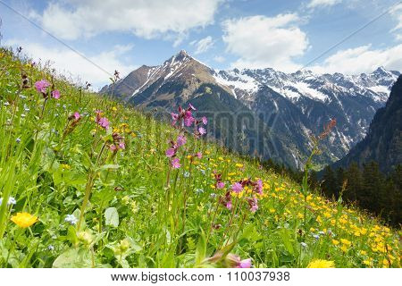 Mountain flower meadow in the Tyrolean Alps