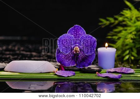 Spa still life with orchid and black stones and bamboo grove