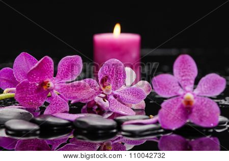 pink branch orchid with candle on therapy stones