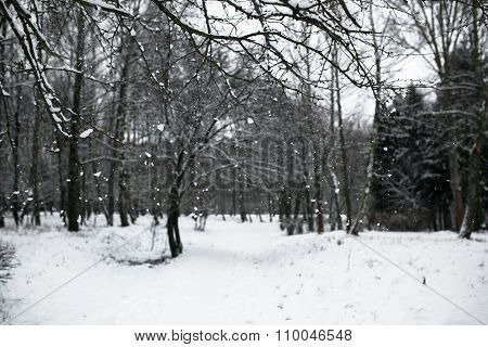 Beautiful calm winter day with outfocus background. Carpathians.