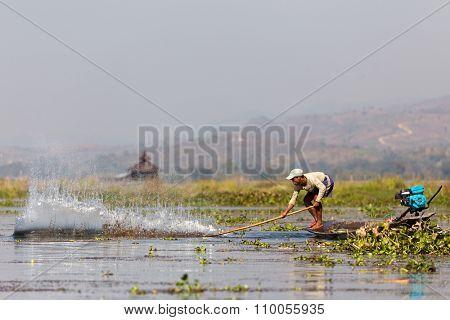 INLE LAKE, MYANMAR, JANUARY 26, 2015 : A Burmese fisherman is splashing the water surface to make the fishes entering the net, traditional fishing in the Inle lake, Myanmar (Burma).