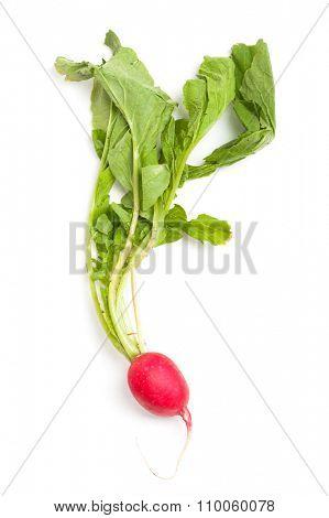 Fresh radish isolated on white background