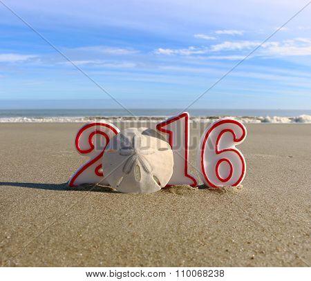 Sand Dollar New Year