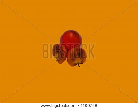 Two Halfs Of Date-Plum Over Unharmed One