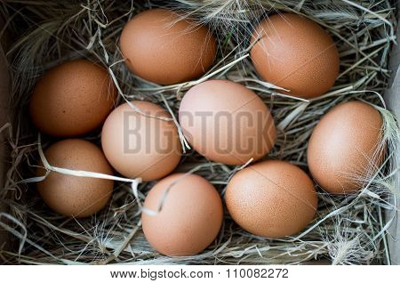 Chicken Eggs In The Nest View From Above