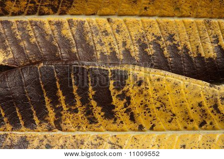 Leaf Color From Nature