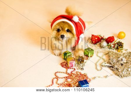 Focus On Dogs Eye , Dog Wearing A Santa Hat