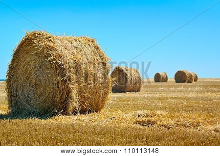 Round Bales Of Straw Lie In The Field After Harvesting