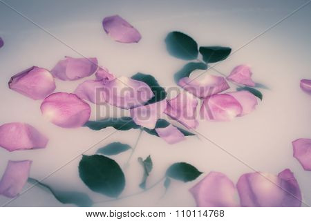 rose petals and leaves float on the milky water, closeup