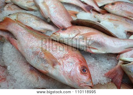 Red Tilapia Fish On Ice