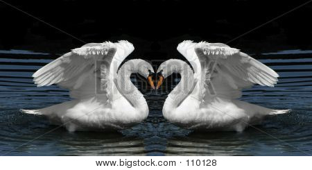 Twin Swans Facing To Create Heart Shape