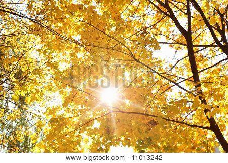 Baum Blätter im Herbst-Thema Sonnenschein über gelb.