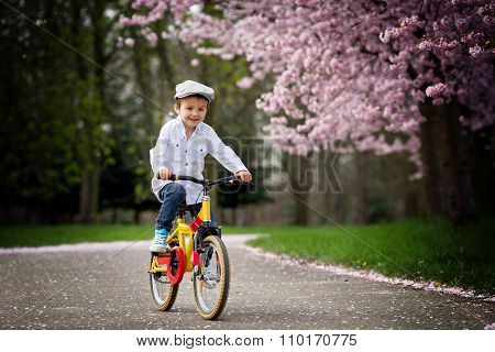 Beautiful Portrait Of Adorable Little Caucasian Boy, Riding A Bike On An Alley In A Cherry Blossom T