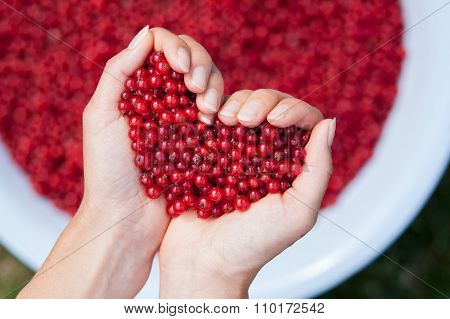 Woman Hands, Holding Red Currants In The Shape Of Heart