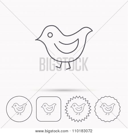 Bird icon. Chick with beak sign.