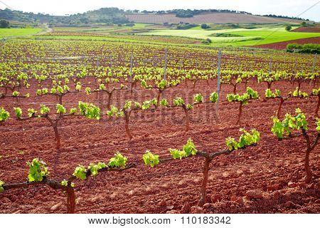 La Rioja vineyard fields by The Way of Saint James in Logrono
