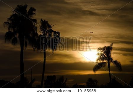 Sunset near City Beach with Palms and Bird