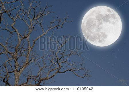 Full moon and beautiful night sky in the winter.