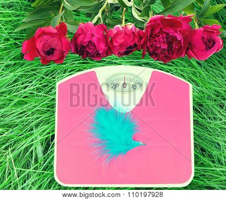 Feather on scales on green grass.  Losing weight for the summer