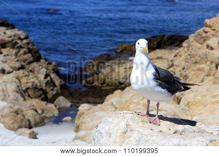 Photo of seagull on the rocks, California, USA