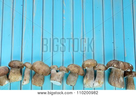 Fresh porcini mushrooms lying in row on wooden turquoise table