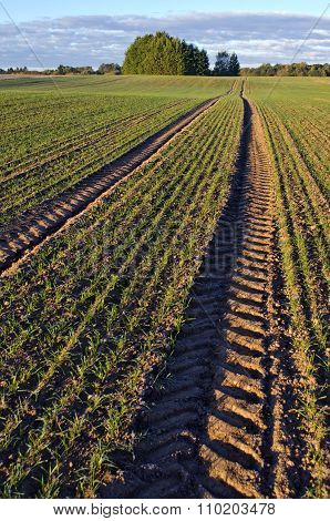 Landscape With Tractor Tracks Through Wheat Field In  Autumn