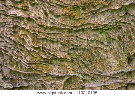 moss on the rock face