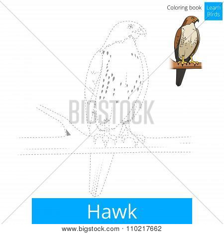 Hawk bird learn birds coloring book vector