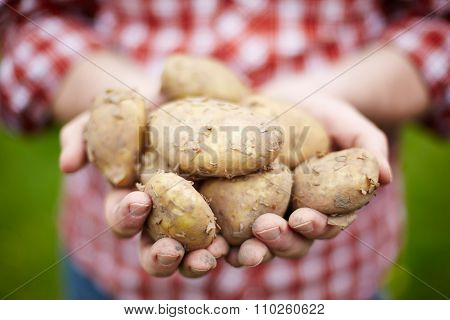 Man Holding Home Grown Jersey Royal Potatoes