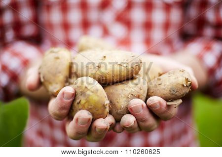 Man Holding Freshly Picked Jersey Royal New Potatoes