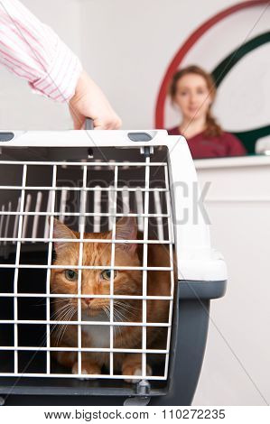 Woman Taking Cat To Vet In Carrier
