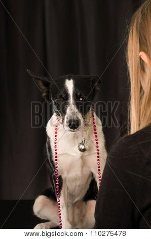 Cute mixed breed dog portrait