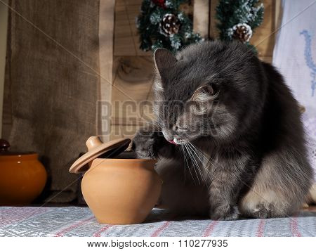 Cat gets food from the pot with a delicious meal in the rustic kitchen