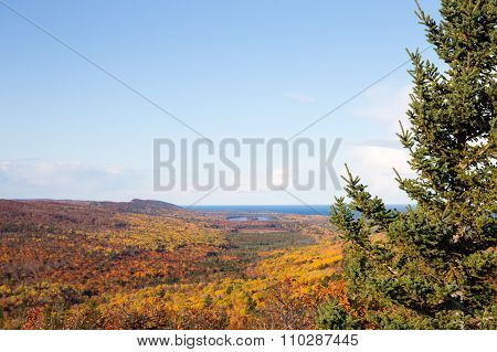 Nature Background - Autumn Colors And Clear Sky Framed By Pine Tree
