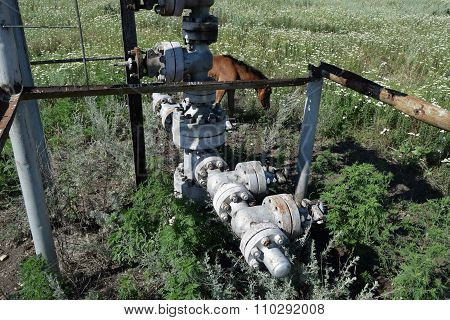 The horses who are grazed at an oil well. An oil field .