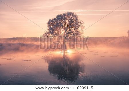 Foggy winter sunrise