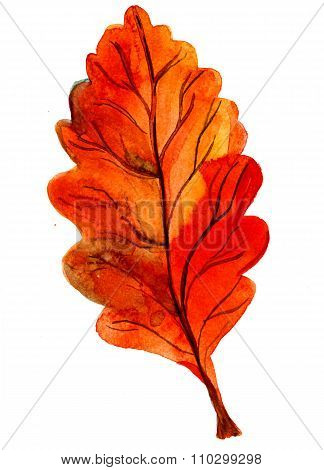 One Autumn Orange Oak Leaf