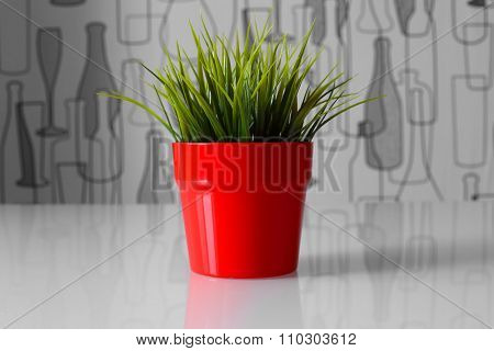 green plant in a red pot