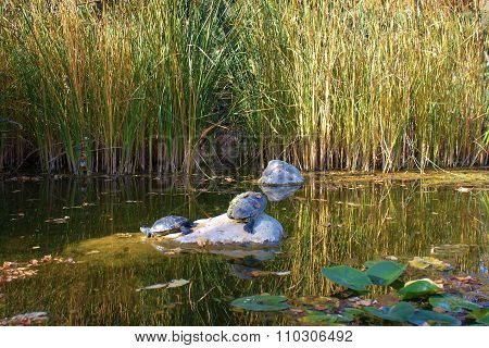 Pond With Turtles