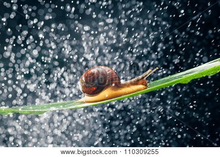snail with water particles bokeh as the background