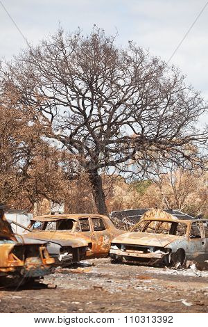 Bushfire Aftermath