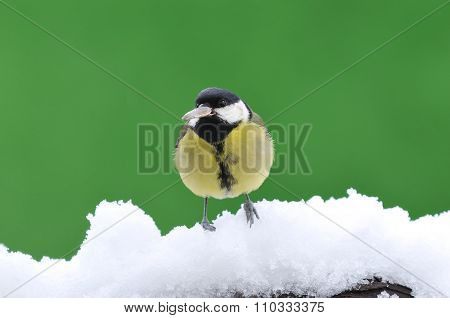 Little Tit Sitting On Snowy Branch