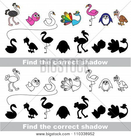 Bird collection. Find correct shadow.
