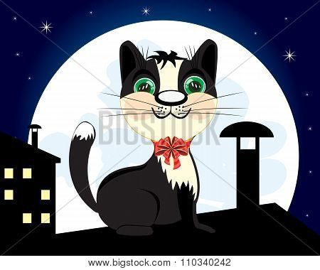 Cat on roof in the night