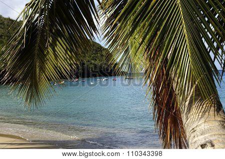 Landscape Of Les Anses D Arlet, Anse Dufour In Martinique