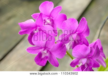 violet orchid flower in garden