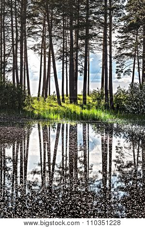 Spring landscape with pines reflecting in the water