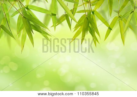 Bamboo leaf and light soft green background
