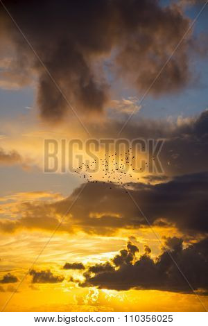 Bright Orange Sunset Sky With Starlings